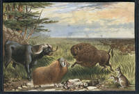 Fanciful chromolithographic view of American Bison, Water Buffalo, long horned sheep & a pair of Kangaroos