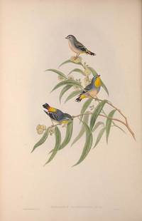 THE BIRDS OF AUSTRALIA  Supplement ( All Species Discovered After Vols.I-VII).