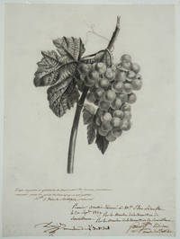 """image of Drawing of Grapes, awarded 1st prize for the year 1829 from the French drawing school """"École Royalle et Gratuite de Dessin pour les Jeunes Personnes"""""""