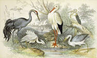 image of Hand Colored Copper Engraved Natural History Print: Stork, Cranes, Heron, and Egret, From Oliver Goldsmith's A History Of The Earth And Animated Nature