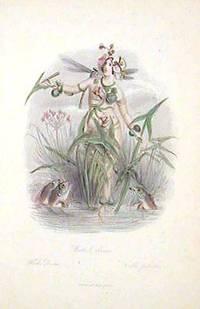 Water Arrow.  Fleche-D'Eau. Calla palustris