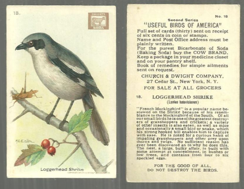 VICTORIAN TRADE CARD FOR CHURCH AND DWIGHT COW BRAND BAKING SODA, USEFUL BIRDS OF AMERICA SERIES, THE LOGGERHEAD SHRIKE, Advertisement