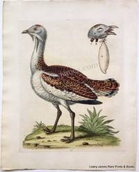 Pl. 73 The Bustard Cock