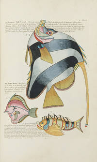Poissons Ecrevisses et Crabes, de diverses couleurs et figures extraordinaires, que l