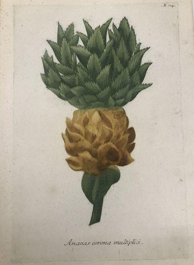 Regensburg: H. Lentz and H.G. Neubauer. unbound. Botanical. Color mezzotint with hand coloring. Page...