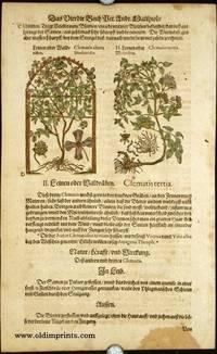 Clematis altera. Dioscoridis. Clematis tertia