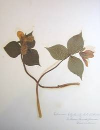 Collection of 15 Botanical Specimens