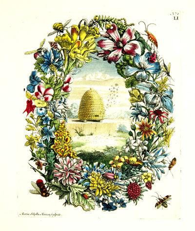 Histoire des Insectes de l'Europe....