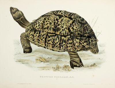 Tortoises, Terrapins, and Turtles...