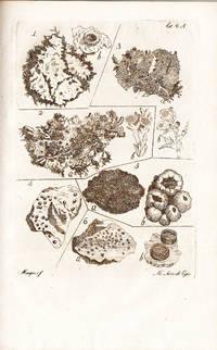 Fasciculus plantarum cryptogamicarum britanniae lusitanorum botanicorum in usum, Celsissimi ac Potentissimi Lusitaniae Principis Regentis Domini Nostri, et Jussu, et Auspiciis denuo typis mandatus, curante Fr. Josepho Mariano Veloso.