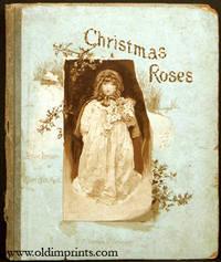 Christmas Roses.