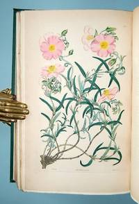 Cistineæ. The Natural Order of Cistus, or Rock-Rose; Illustrated by coloured figures and descriptions of the Distinct Species, and the most Prominent Varieties, that could be at present procured in the Gardens of Great Britain; with the best direction for their cultivation and propagation