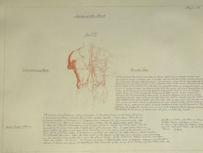 ARTIST'S ANATOMICAL DRAWING BOOK,...