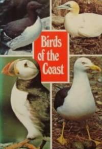 Birds Of The Coast: Sea Birds ( Jarrold Bird Series Book 2)