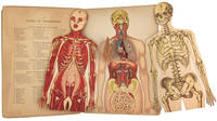 WHITTAKER'S ANATOMICAL MODEL. A PICTORIAL REPRESENTATION OF THE HUMAN FRAME AND ITS ORGANS. WITH DESCRIPTIVE TEXT BY DR. SCHMIDT. ENGLISH EDITION BY WILLIAM S. FURNEAUX . . . . ILLUSTRATED