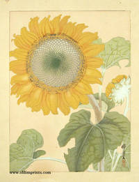 Untitled Japanese woodcut of a Sunflower