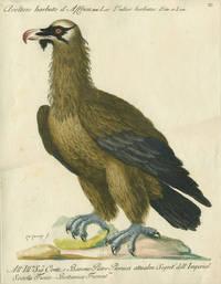 """Avoltoio barbuto d'Africa, Plate XI, engraving from """"Storia naturale degli uccelli trattata con metodo e adornata di figure intagliate in rame e miniate al naturale"""""""
