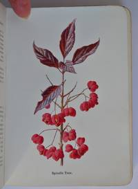 Wild Fruits of the Country-side, figured and described