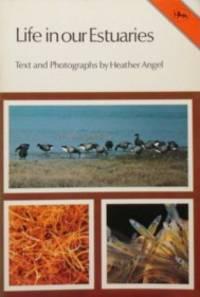 Life In Our Estuaries ( Jarrold Aquatic Life Series Book 2)