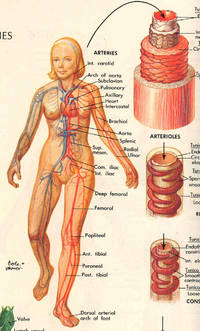 Encyclopedia and dictionary of medicine and nursing