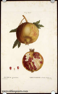 Punica granatum. Grenadier a fruits doux. by  P.J.  (illus).  Gabriel (engraved by) POMEGRANATE) Redoute - Ca. 1801- 1819. - from oldimprints.com and Biblio.com