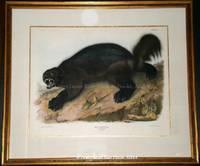 Plate XXVI Wolverine. Gulo Luscus, Lin (Linnaeus).