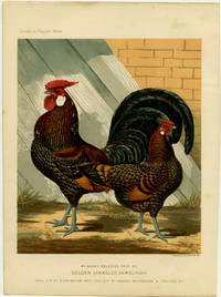 Mr. Henry Beldon's Pair of Golden Spangled Hamburghs. Cock Cup at Birmingham 1870, Hen Cup at Kendal, Whitehouse & Spalding 1871