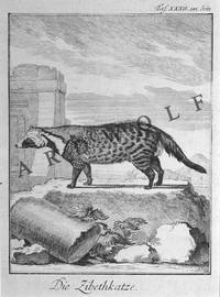 image of 18th c. Copper Engraving, Die Ziebethkatze (Civet Cat), From Buffon's Histoire  Naturelle