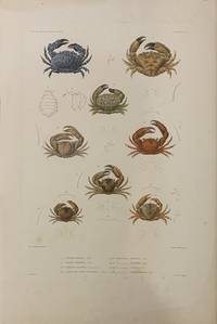 Crustaces PL.4