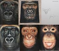 JAMES & OTHER APES: PHOTOGRAPHS BY JAMES MOLLISON