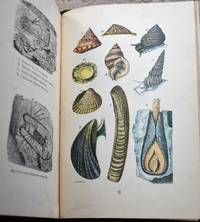 image of THE COMMON OBJECTS OF THE SEA-SHORE Including Hints For An Aquarium
