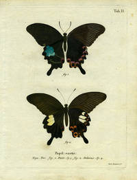 Papil. Exotic by  Joh [ButterflyMoth Engraving]  Leitner - 1780 - from Antipodean Books, Maps & Prints and Biblio.com