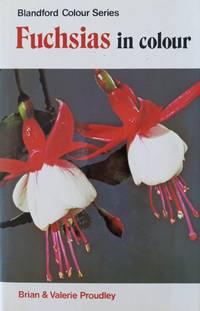 image of Fuchsias in colour