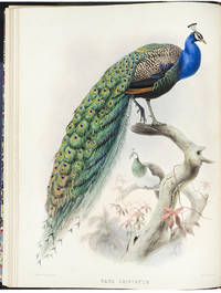 A Monograph of the Phasianidae or Family of the Pheasants