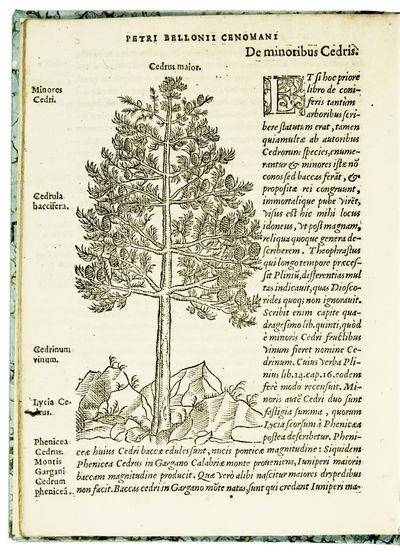 De arboribus coniferis, resiniferis,...