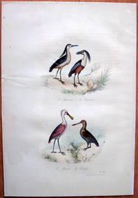 Antique Bird Print. Eurasian Hobby (Falcons). by Edouard Travies - from Ken Jackson (SKU: 245253)