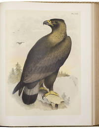 Studer's Popular Ornithology. The Birds of North America