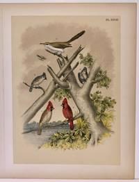 Plate XXVIII The Yellow-billed Cuckoo, Crested Titmouse, Cardinal