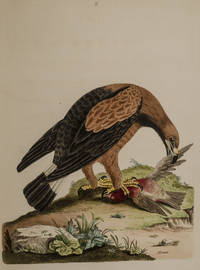 Nouvelles Illustrations de Zoologie / New Illustrations of Zoology