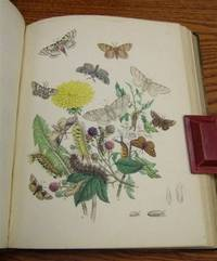 British Moths and Their Transformations (2 Vols.)