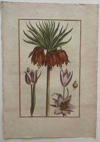 Tulip and Imperial Crown Lily