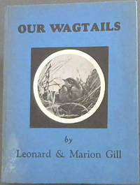 Our Wagtails