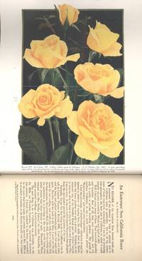 "The American Rose Annual, the 1932 Year-Book of Rose Progress.17[Roses for hedges; Roses & economics; ""Bench roses""; Rose understocks compared at Arlington farm; Rose understocks used in Texas; Rose-disease investigations; Adhesiveness of sulphur fungicides to rose foliage; Black-spot can be controlled; Injury to roses from the apple-tree borer; The rose ""disease"" radianceitis; Can the water-culture method be used for rose-production?; American wild roses; Rosa gigantea & its allied species; Appeal of old roses; Roses of the forty-niners; Old roses in Calvert County, Maryland; Old roses in the mountains; Bloomfield seedlings; Modern climbers in Atlanta; Florida; Califronia roses; Ontario; Rome; Australia; New roses of the world]"