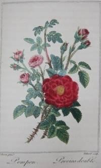Histoire des Roses Ornee de 12 Planches en couleur