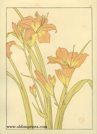 The Day Lily