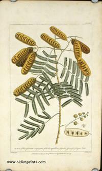 Acacia foliis pinnatis conjugatis...