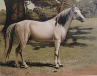 The Arab Pony Charger of General Sir Hope Grant, G.C.B.