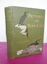 PICTURES OF BIRD LIFE. On woodland, Meadow, Mountain and Marsh