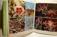 Wildflowers of Western America by  Margaret C  Robert T.; ORR - First Edition - 1974 - from Bluebird Books and Biblio.co.uk