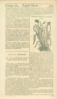 Flowerdeluce Tuberous narrow-leav'd Greater
